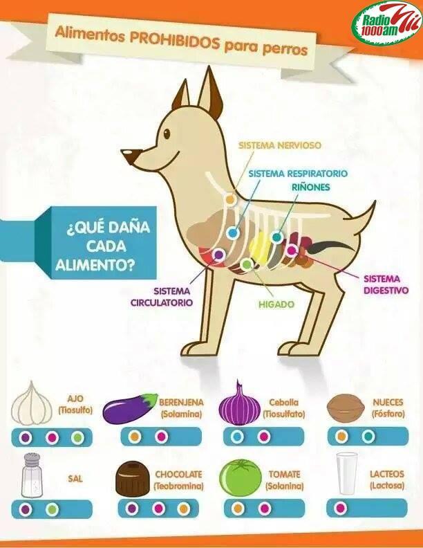 Alimentos Prohibidos Para Los Perros Mascotas Perros Dueños De Perros