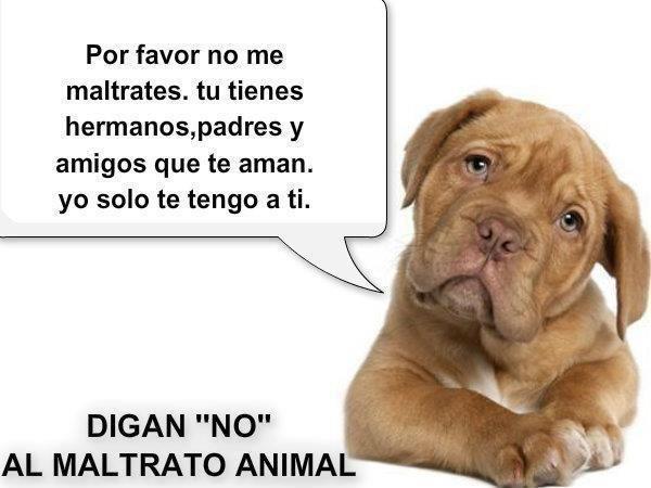 Imagenes Contra El Maltrato Animal Buscar Con Google