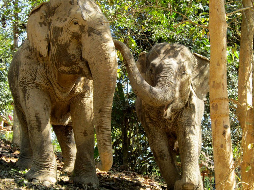 Having so much fun together.... — at Boon Lott\'s Elephant Santuary ...
