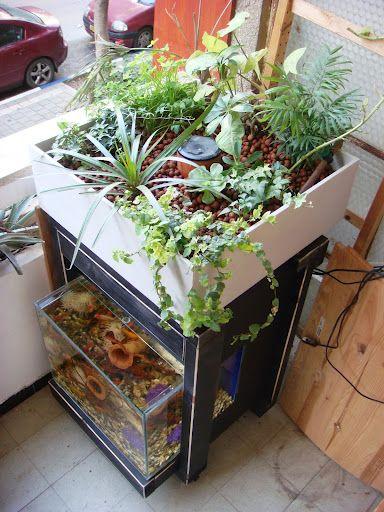 Indoors aquaponics system aquaponics for Aquaponics fish tank