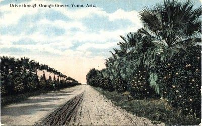 Citrus The Arizona Experience Landscapes People Culture And Country Roads Landscape Favorite Places