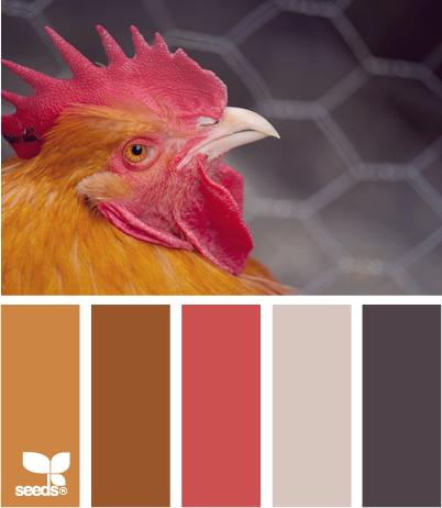 color  chicken