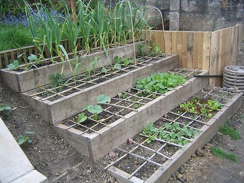 Raised beds for a slope bamboo canes discourage cats for Terrace vegetable garden ideas