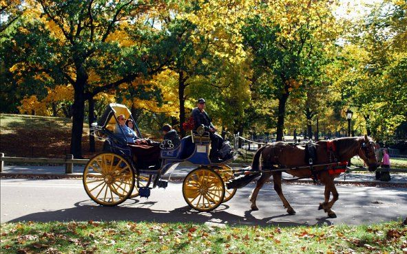 Central Park Horse & Carriage Ride  Tavern on the Green | http://ift.tt/2f5UZXJ #pin #deals #travel #traveldeals #tour #show #musicals #usa #unitedstates #orlando #lasvegas #newyork #LosAngeles #SanFrancisco #hawaii #Central Park Horse & Carriage Ride  Tavern on the Green