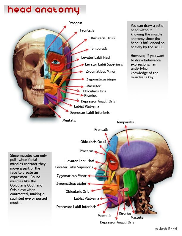 Drawsh: The Head | Anatomy Ref | Pinterest | Nase und Auge
