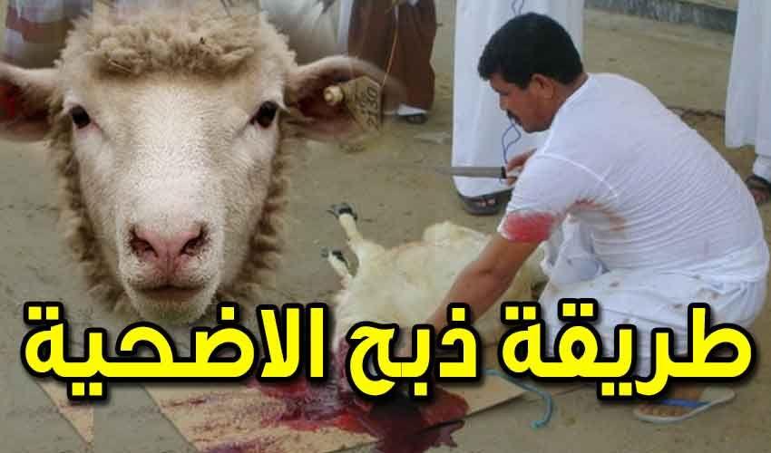 خروف العيد Animals Lamb Goats