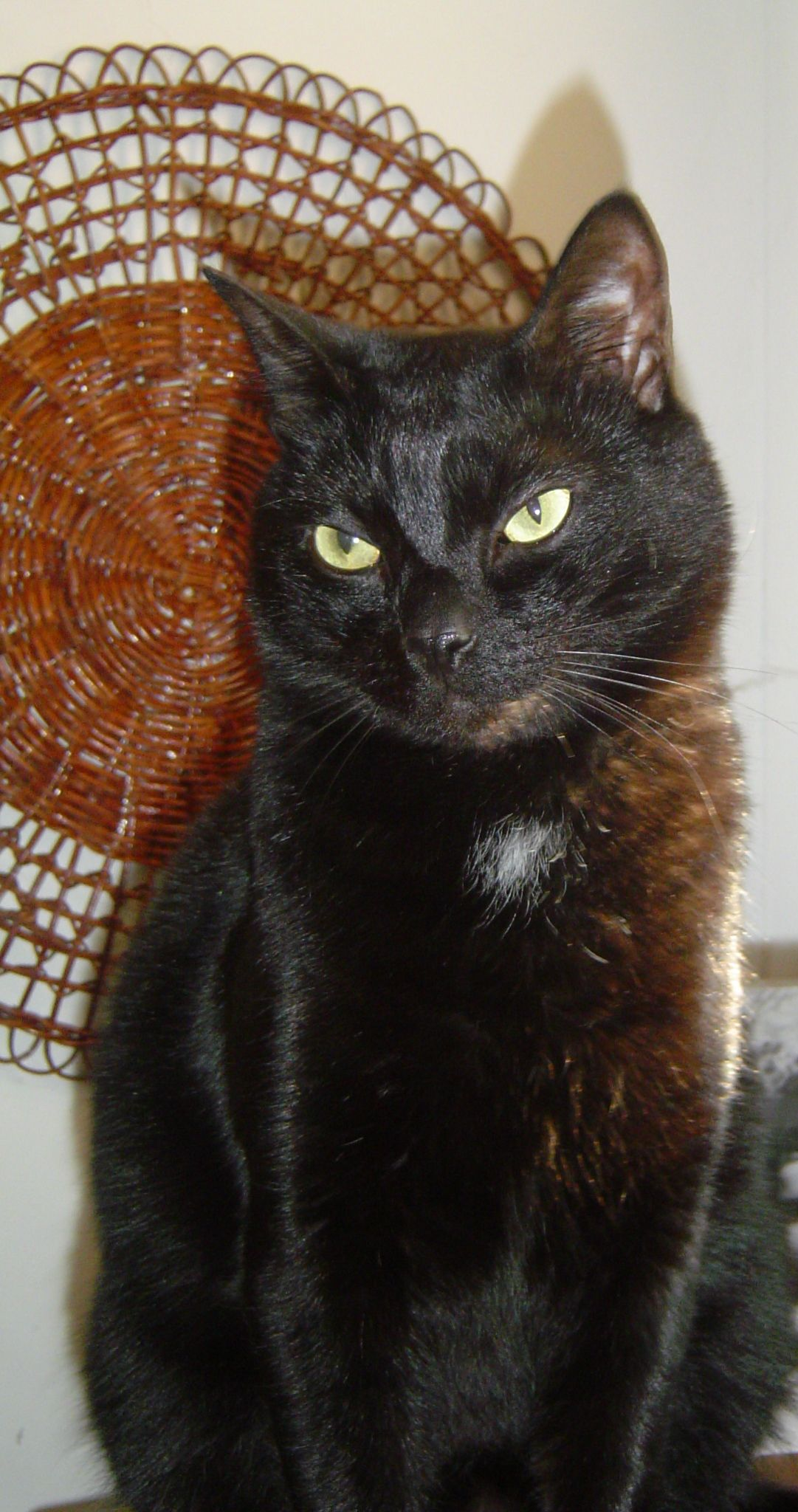 RIP my beautiful cat Bubba I am not Bubba's mommy but I am