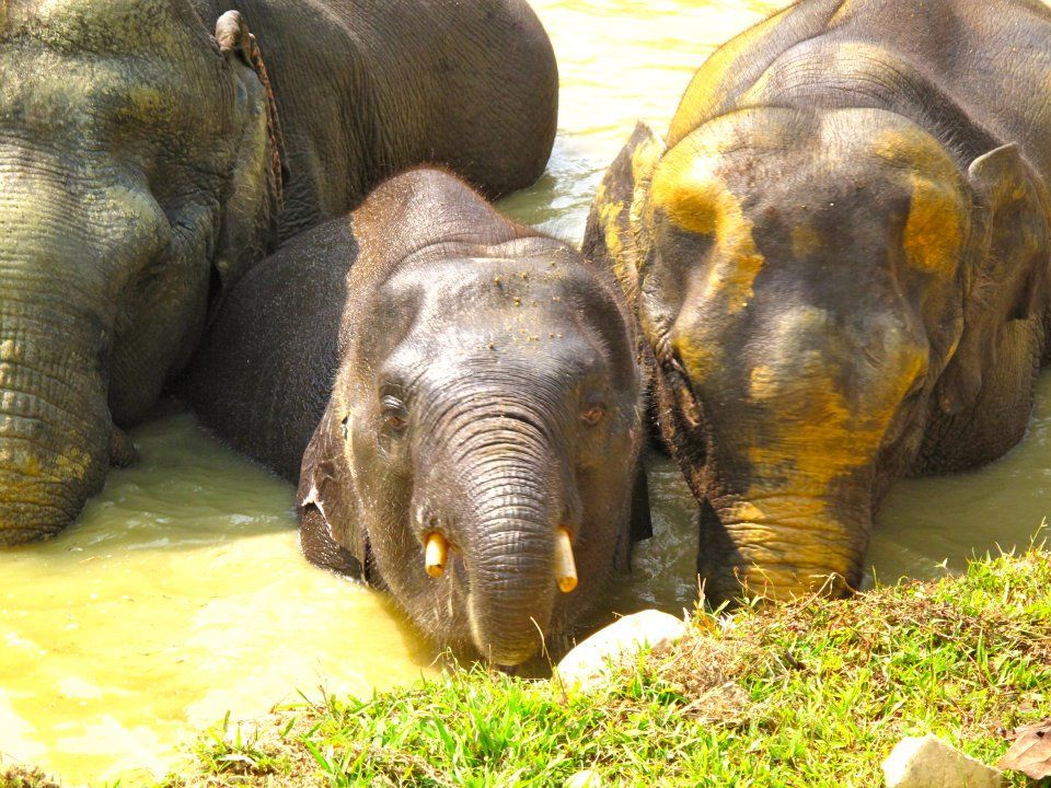 It\'s good to be home!!!!\' — at Boon Lott\'s Elephant Sanctuary (BLES ...