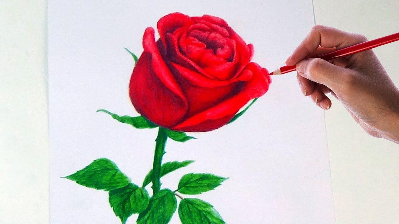 Drawing A Rose Flower With Simple Colored Pencils Rose Flower Sketch Flower Drawing Flower Drawings With Color