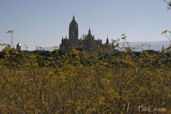 Primavera y catedral