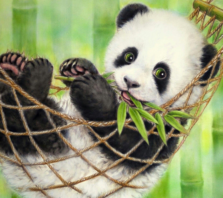 Pin By Jiselakpop On Carol S Board Panda Bear Panda Bears Wallpaper Panda Wallpapers Best of wallpaper cute baby panda cute