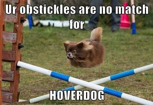Hoverdog.