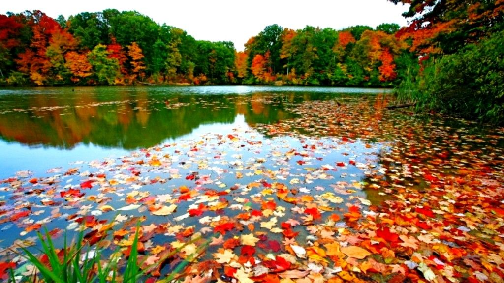 Autumn Images For Your Desktop Background Fall Leaves Desktop Background Leaves Falling Into Lake Desktop Wallpaper Fall Fall Wallpaper Autumn Leaves Wallpaper