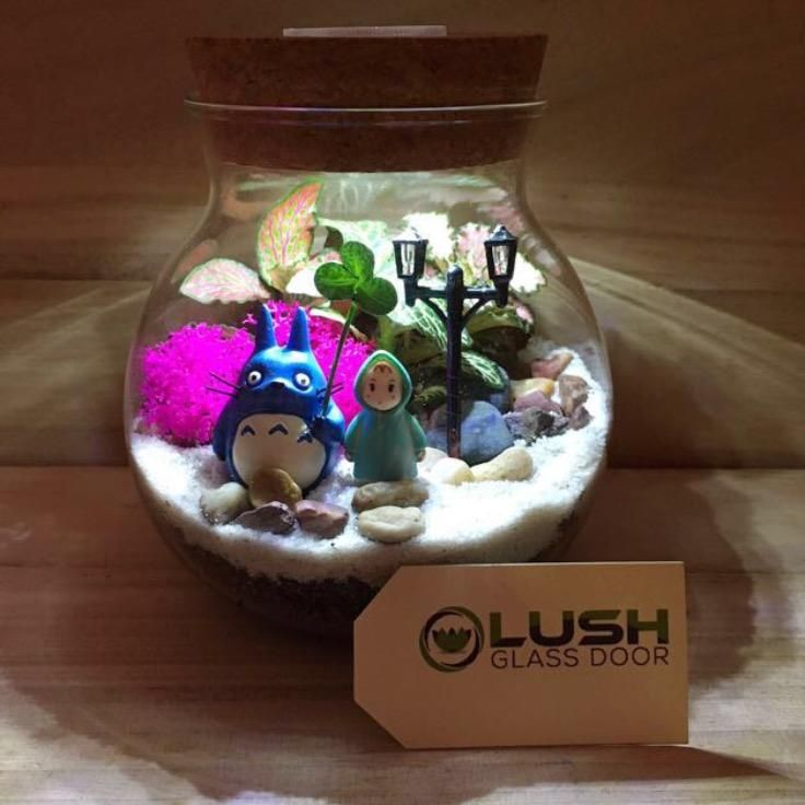 Totoro Themed Fittonia Terrarium With Light By Lush Glass Door