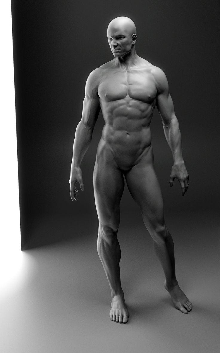 Pin by West Richins on Anatomy Aids | Pinterest | Anatomy and ZBrush