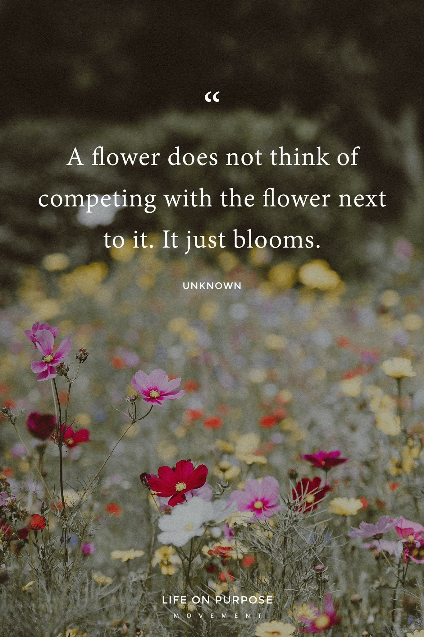 Flower Blooming Quote Flowers Thoughts Ideas Pinterest