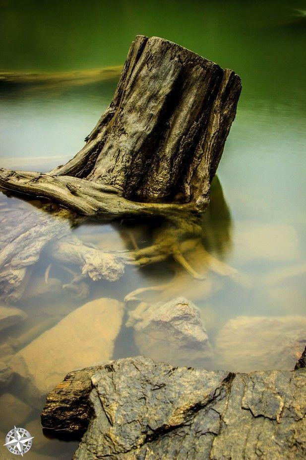 "Photo ""TreeStump"" by JBBunting"