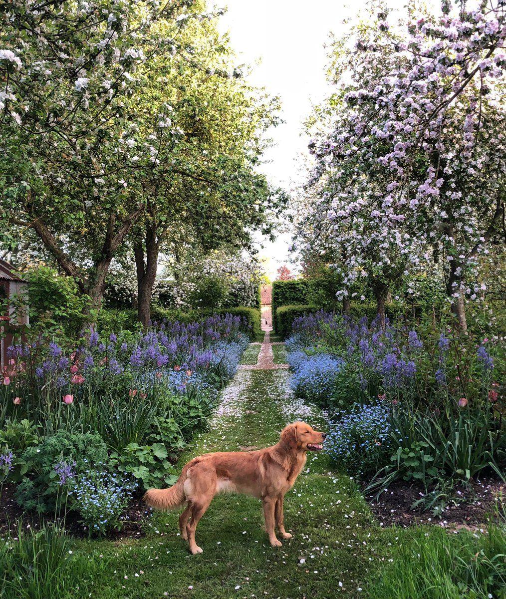 The English Garden On Twitter Plants Garden Borders Garden Shrubs