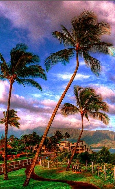 Kauai, Hawaii - Hawaii is not just a group of tropical islands in the middle of the Pacific Ocean. Each Island has its own story, its own energy and its own legend. We have brought together four islands that will offer you a new experience every day, whether you're on a golf course, getting a spa treatment or off on a adventure designed for you …come fly with us to the Big Island, Maui, Kauai and Oahu for a memorable experience.