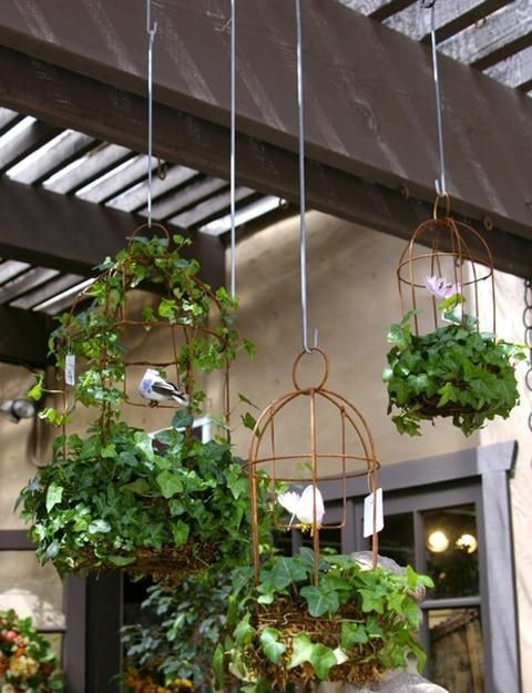 Plants in Birdcages! Never thought of this but God these would be soo cool!