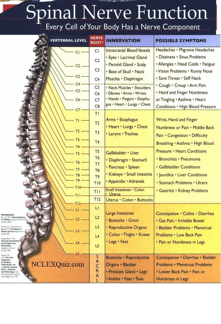Spinal Nerve Function Cheat Sheet Mind Body Physical