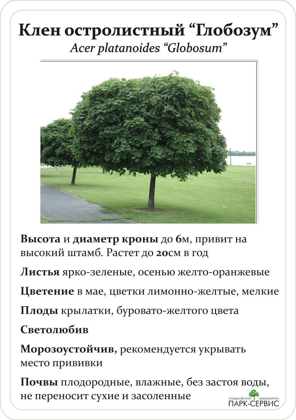 Лиственные (с изображениями) | Дизайн озеленение, Садовые ...