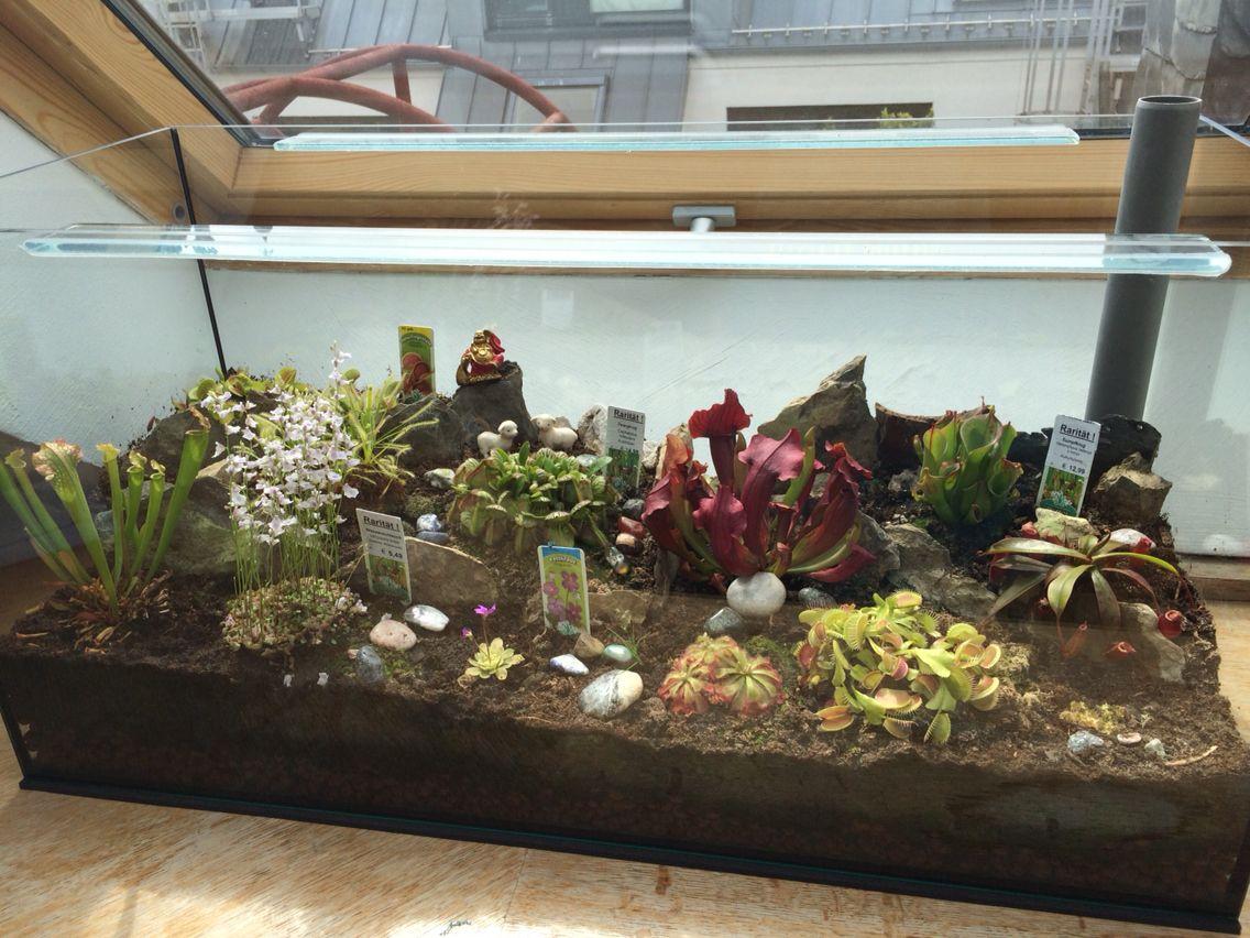 Pflanzen Terrarium Einrichten : fleischfressende pflanzen terrarium selbst gebaut terrarium pflanzen und fleischfresser ~ Watch28wear.com Haus und Dekorationen