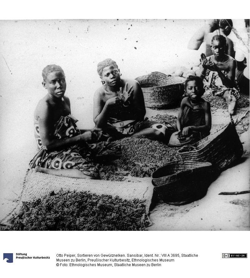 SMB-digital | Sortieren von Gewürznelken. Sansibar