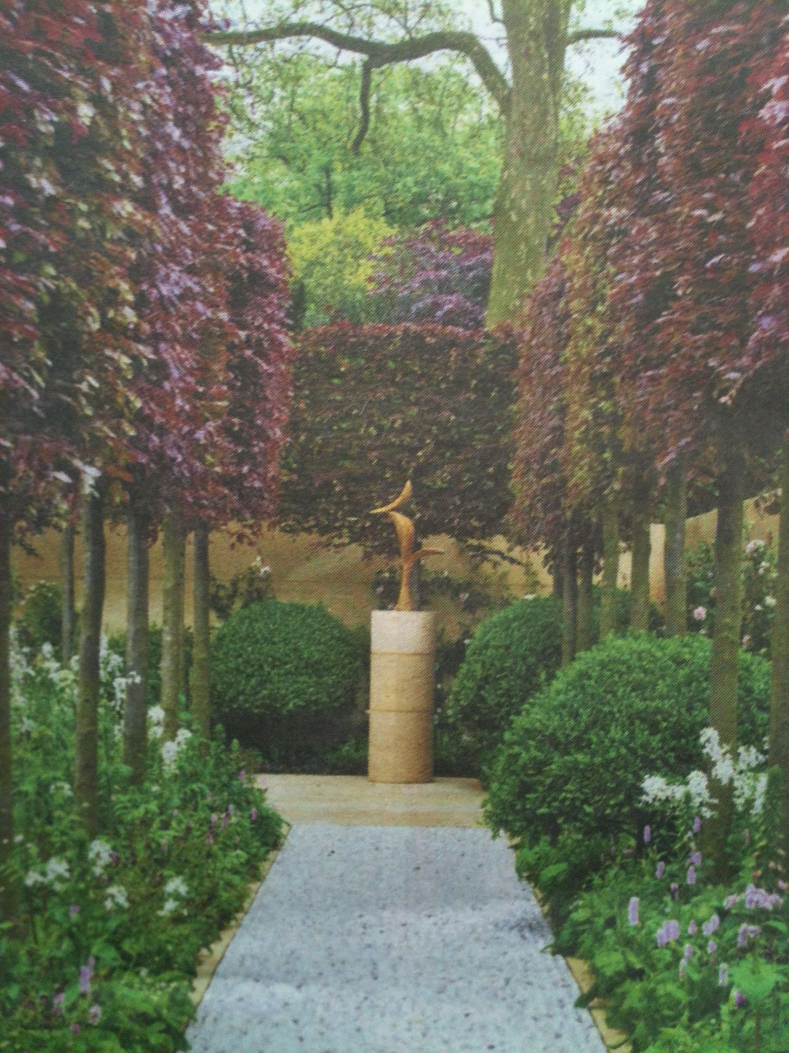 colour u0026 privacy in the garden with an avenue of pleached copper