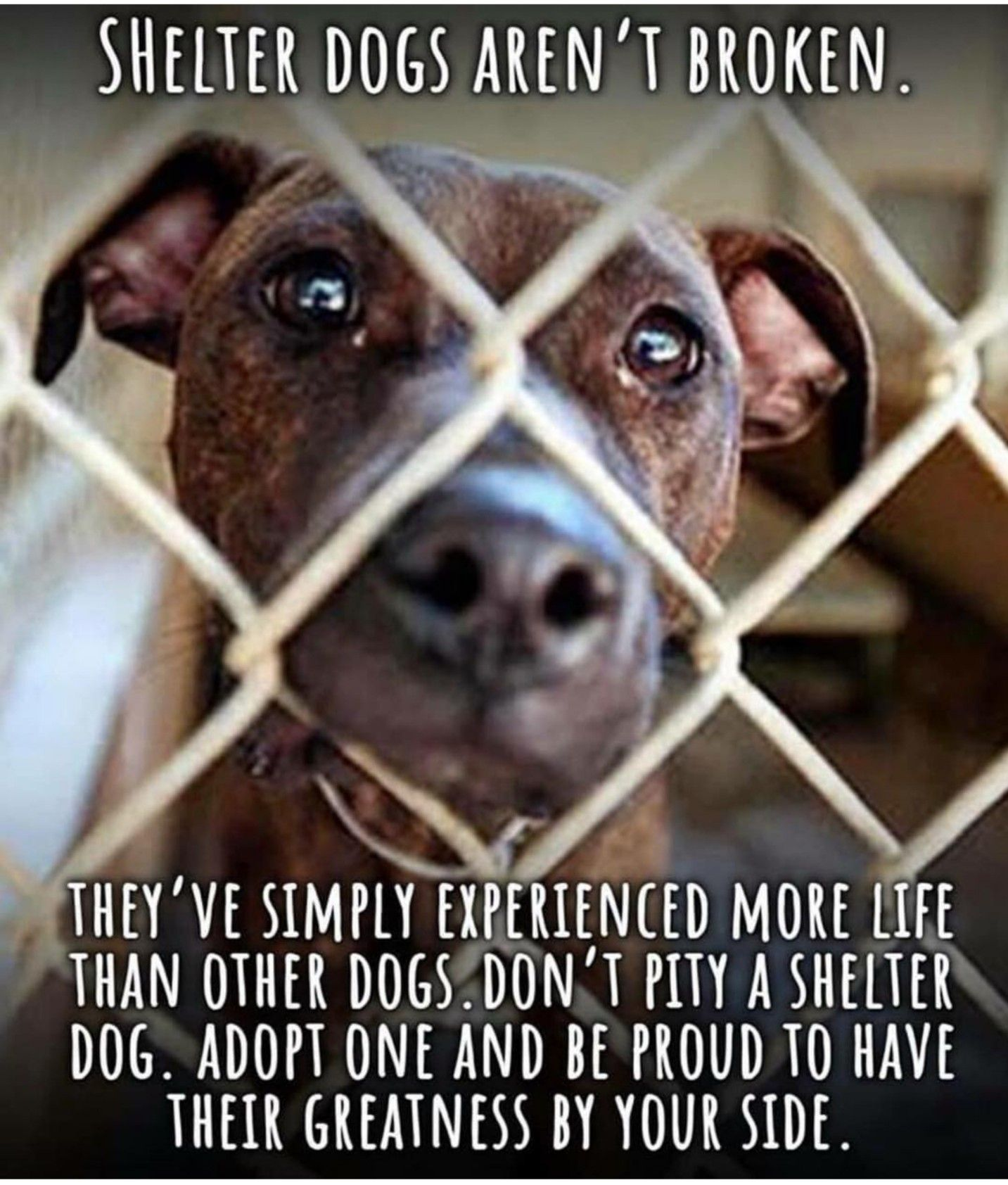 Pin By Mel07 On Animal Advocacy Dog Adoption Dogs Shelter Dogs