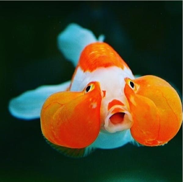 Pin On Beautiful Fish