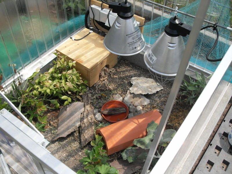 Schildkroete Bayern Tiger Gehege Schildkrötengehege Frühbeet