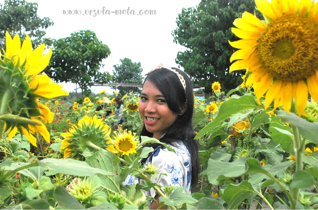 Indahnya Warna Warni Bunga Di Taman Matahari Cinta Yogyakarta Kebun Taman Bunga