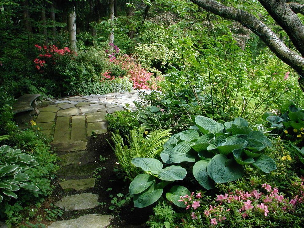 hosta garden landscape contemporary with perfect path for ...