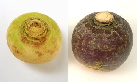 Are Neeps Swedes Or Turnips Turnip What Is Swede Burns Night