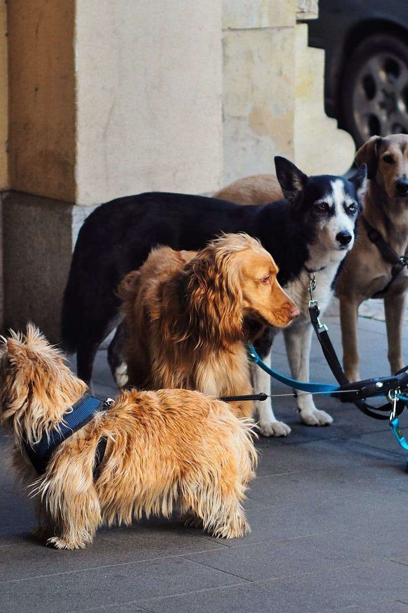 Learn How To Train Your Dog Lots Of People Feel That Dog Training