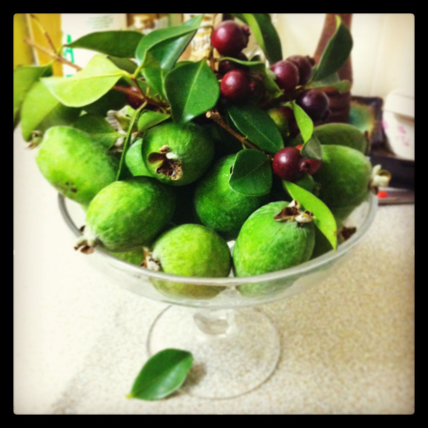 Feijoas - they smell so perfumed and divine