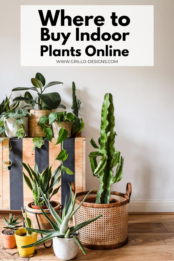 Buy Indoor Plants