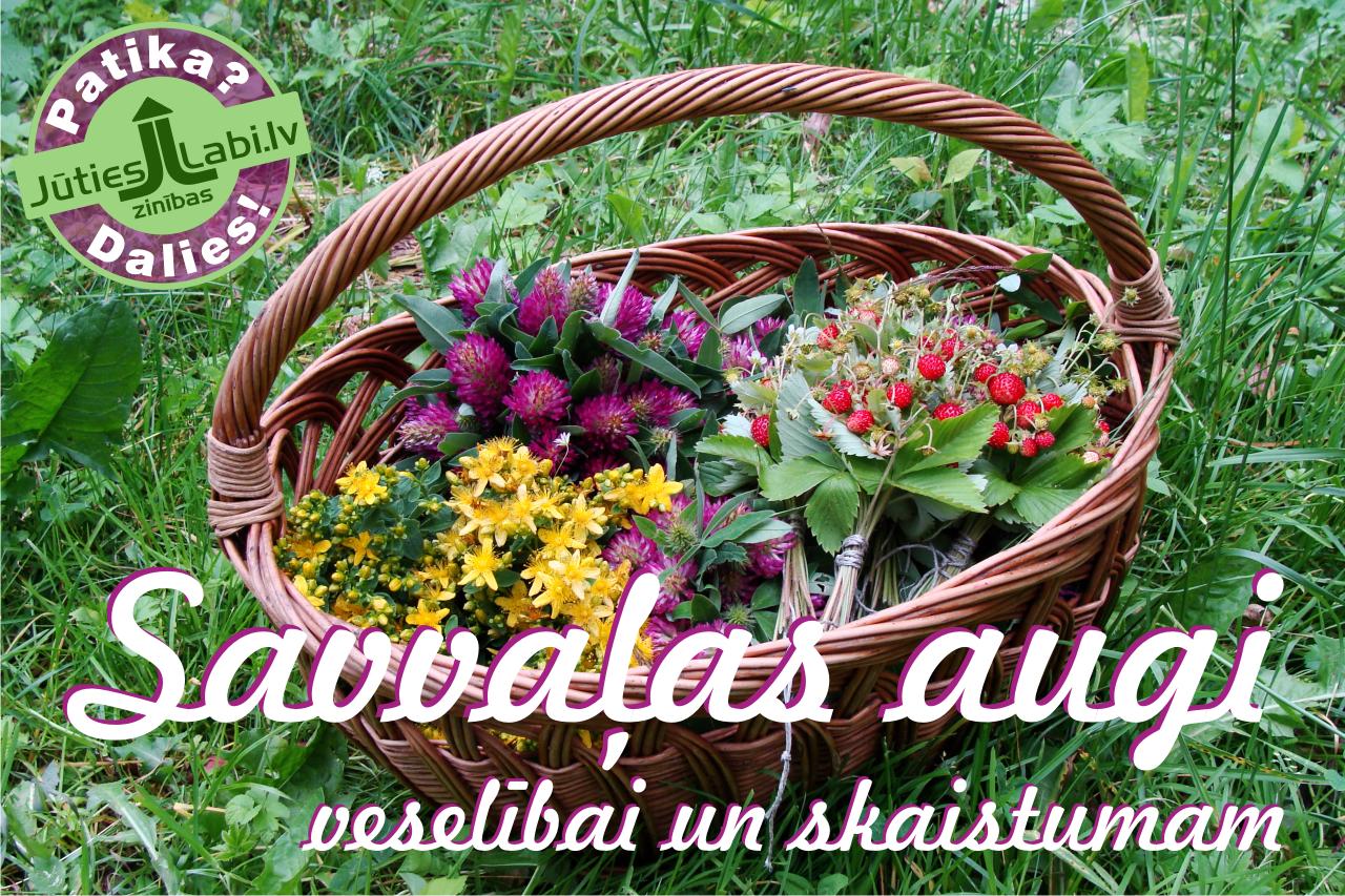Jūties labi!: Savvaļas augi veselībai un skaistumam