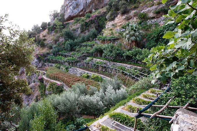 Beautiful Garden on Hill in Italy | Italian Vegetables to Grow ...