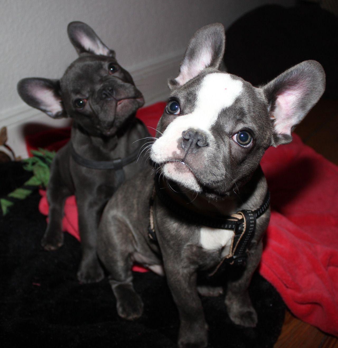 Blue und Pepe sind Brüder und fast immer ein Herz und eine Seele http://bit.ly/1HF5ys3 - our Smartphone App ==> http://bit.ly/1ewSxCP