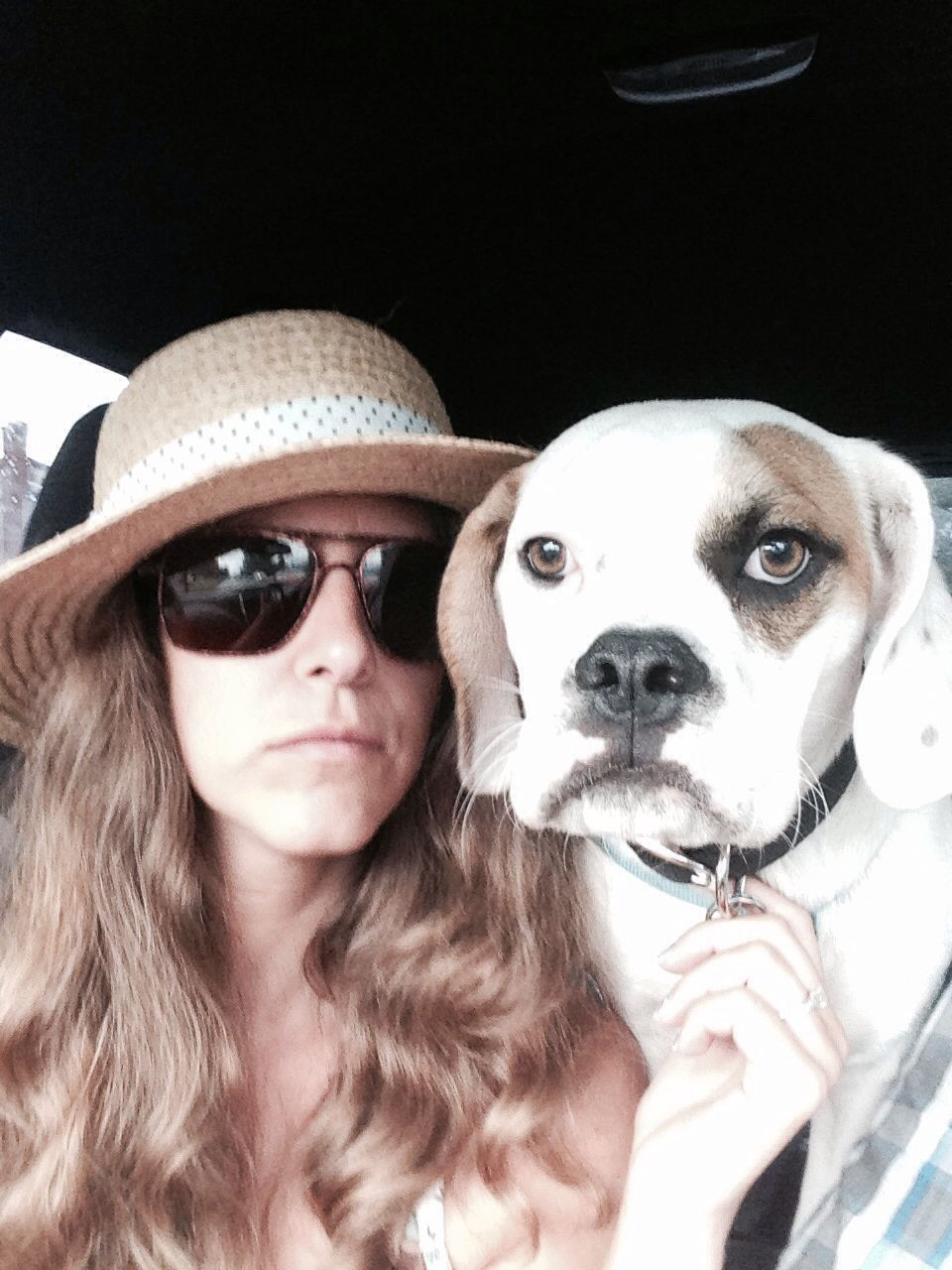 Mini bulldog - Humphrey