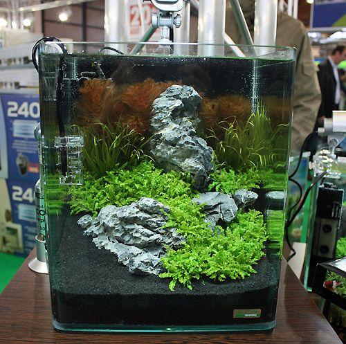 Iwagumi Nano Tank Nano Tank Betta Fish Tank Nano Aquarium