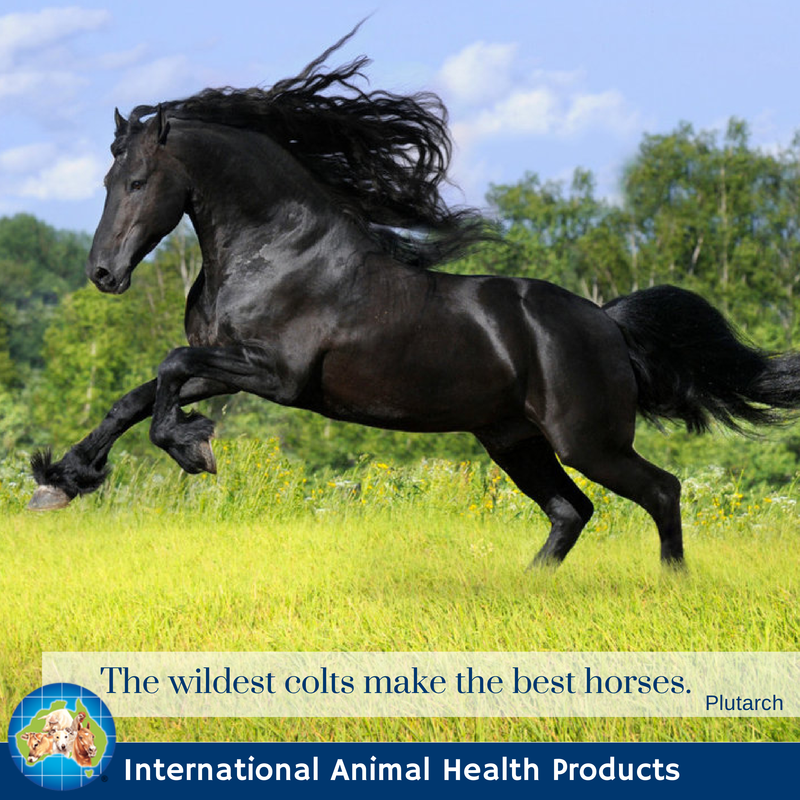 The wildest colts make the best horses.