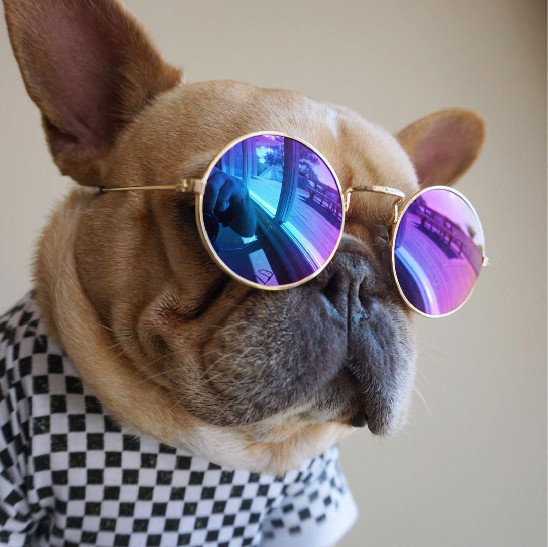 Картинка собака с очками