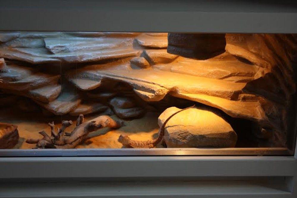 kameleon terrarium - Google Search