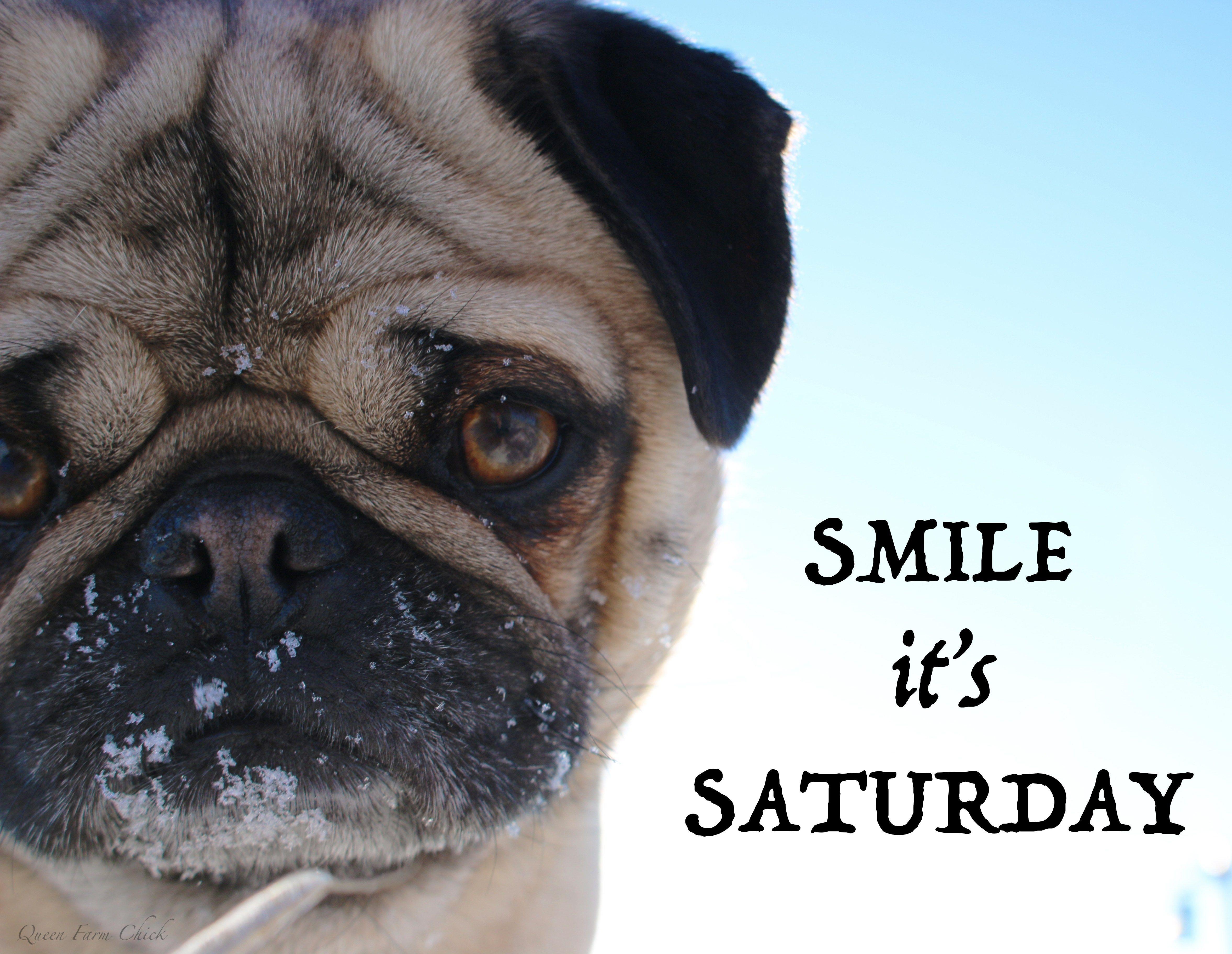 Smile It S Saturday Pugs Go For It Quotes Farm Photo