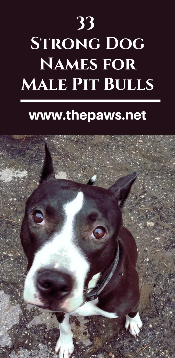 33 Strong Dog Names For Male Pit Bulls Strong Dog Names Dog
