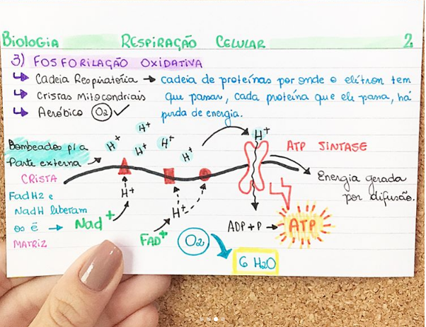Biologia Respiracao Celular Parte 3 Respiracao Celular Fosforilacao Oxidativa Biologia