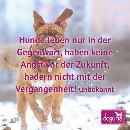 Hunde Leben Nur In Der Gegenwart Haben Keine Angst Vor Der Zukunft